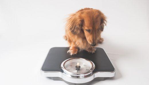 低カロリードッグフードランキング!肥満が気になる犬(去勢避妊済も)