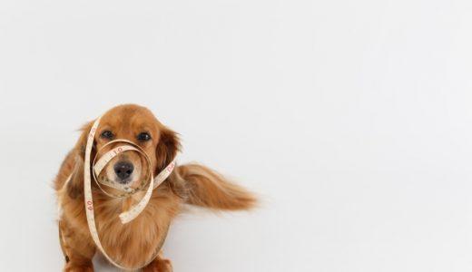 痩せ気味の犬ドッグフードの正しい選び方と人気おすすめランキング