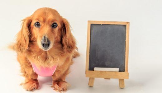 【犬の名前の決め方】オス・メスや和風・洋風など人気の名前も紹介
