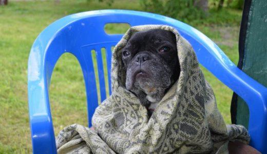 【犬がブルブルっと震える理由と対処法】病気のサインと問題ない震え