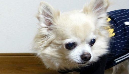 犬を去勢する時期はいつ?値段・デメリットや必要・不要の判断基準も紹介