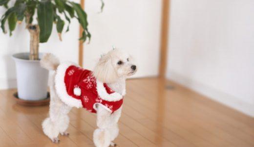 【部屋に付いた犬の臭いを消す方法】空気清浄機やスプレーなど効果的なのは?