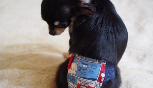 犬の生理はいつから?期間・周期や症状・対処法・気を付ける事など